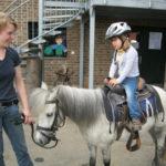 Pony kind