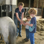 Kinder striegeln ponys